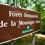 Forêt de la Montagne Noire