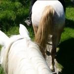 Balade à cheval dans le Tarn