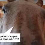 Gîte et chambres d'hôtes, un nouvel abri pour vos chevaux