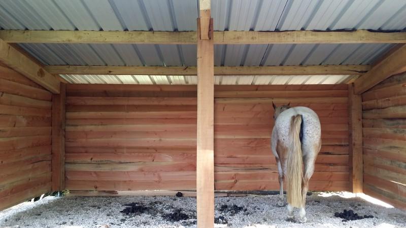 Gîte équestre, un nouvel abri pour vos chevaux