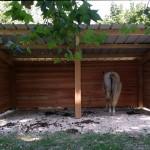 Gîte équestre, un nouvel abri pour chevaux