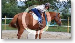 Débourrage d'un cheval en douceur