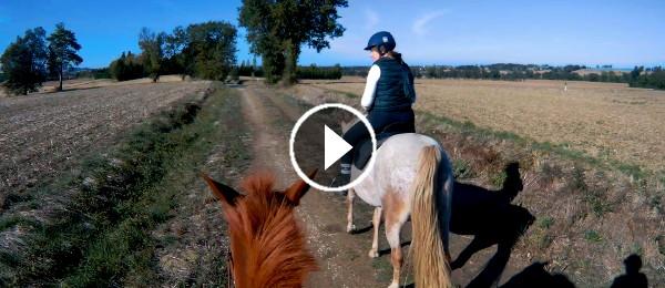 Balades à cheval dans le Tarn