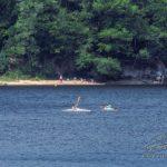 Baignade au lac du Lampy