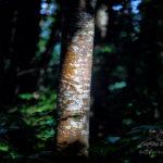 Forêt des Cammazes