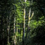 Forêt des Cammazes depuis la Rigole