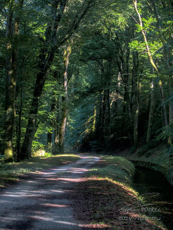 Forêt des Cammazes et la Rigole