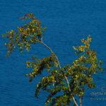 Lac des Cammazes
