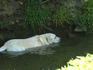 Refroidissement à eau