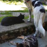 Les chats et le chien