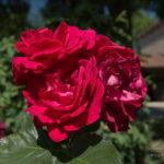 Un domaine fleuri